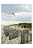 Dawning Seagull and Godbeams