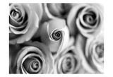 Monotone Bouquet