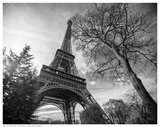 Eiffel Tower With Tree