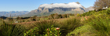 Elevated View of Vineyard with Mountains in the Background  Jonkershoek Nature Reserve