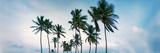 Low Angle View of Palm Trees  Santa Maria Del Mar Beach  Havana  Cuba