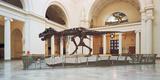 Tyrannosaurus Rex Skull in Field Museum  Chicago  Illinois  USA