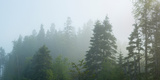Fog over Trees  Marathon  Ontario  Canada