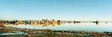Tufas in a Lake  Mono Lake  Mono County  California  USA