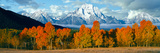 Trees in a Forest with Snowcapped Mountain Range in the Background  Teton Range  Oxbow Bend