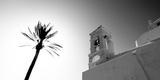 Low Angle View of a Palm Tree Near a Church   Ios  Cyclades Islands  Greece