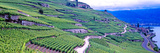 Vineyards in the Lavaux-Oron Region  Vaud Canton  Switzerland
