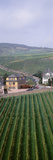Vineyards in Town of Rudesheim Am Rhein  Hesse  Germany
