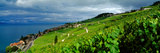 Vineyards and the Town of Rivaz  Lavaux-Oron  Vaud Canton  Switzerland