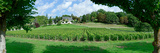 Scenic View of Vineyard  Vouvray  Noizay  Indre-Et-Loire  Loire Valley  France