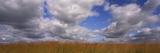 Clouds over a Field  Iowa  USA