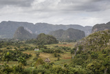 Mogotes in the Vinales Valley  UNESCO World Heritage Site  Pinar Del Rio  Cuba  West Indies