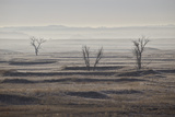 Three Bare Trees on a Hazy Morning  Badlands National Park  South Dakota