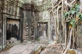 Tree Roots Growing on Ta Prohm Temple (Rajavihara) Ruins  Angkor  UNESCO World Heritage Site