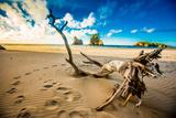 Driftwood in Golden Bay  Tasman Region  South Island  New Zealand  Pacific