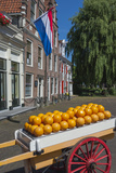 Edam Cheese Balls  Edam  Holland  Europe