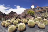 Cactus Garden Jardin De Cactus by Cesar Manrique  Wind Mill  UNESCO Biosphere Reserve