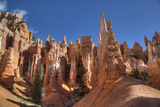 Hoodoos  on the Queens Garden Trail  Bryce Canyon National Park  Utah  United States of America