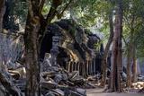 Ta Prohm Temple  Built in the 12th Century by King Jayavarman Vii  Angkor