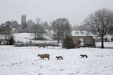 St James' Church and Sheep with Lambs in Snow  Chipping Campden  Cotswolds