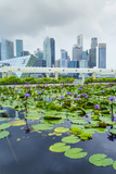 Water Lily Garden by the Artscience Museum with City Skyline Beyond  Marina Bay  Singapore
