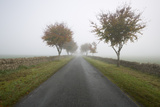 Empty Tree Lined Road in Fog  Yanworth  Gloucestershire  England  United Kingdom  Europe