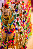 Camel at the Pushkar Camel Fair  Pushkar  Rajasthan  India  Asia