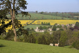 Oilseed Rape Fields and Sheep Above Cotswold Village  Guiting Power  Cotswolds