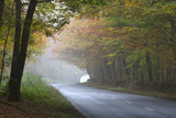 Road Running Through Foggy Autumnal Woodland  Near Stow-On-The-Wold  Cotswolds