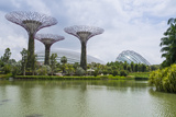 Supertree Grove in the Gardens by the Bay  a Futuristic Botanical Gardens and Park  Marina Bay