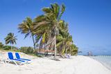 Palm Trees and Beach  Playa El Paso  Cayo Guillermo  Jardines Del Rey  Ciego De Avila Province