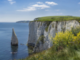 The Chalk Cliffs of Ballard Down with the Pinnacles Stack in Swanage Bay  Near Handfast Point
