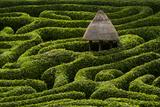 A Maze in Glendurgan Garden on the Lizard Peninsula in Cornwall  England  United Kingdom  Europe