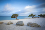 Divi Divi Trees on Eagle Beach  Aruba  Lesser Antilles  Netherlands Antilles  Caribbean