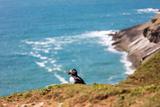 Puffin on Skomer Island  Pembrokeshire  Wales  United Kingdom  Europe