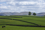 Dry Stone Walls  Eden Valley  Cumbria  England  United Kingdom  Europe