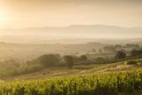 Vineyards Near to Montefalco  Umbria  Ittaly  Europe