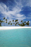 Palm Trees and Tropical Beach  Maldives  Indian Ocean  Asia