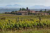 Idyllic Vineyard in La Rioja  Spain  Europe