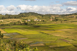 Paddy Rice Field Landscape in the Madagascar Central Highlands Near Ambohimahasoa
