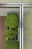 Above View of Box Shrubs in Green Metal Planters in Corner of Garden  Chelsea  UK