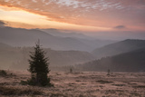 Misty Forest and Carpathian Mountains Landscape at Sunrise  Ranca  Parang Mountains