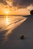 Coconut on a Tropical Beach at Sunset  Rarotonga Island  Cook Islands  South Pacific  Pacific