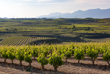 Vineyards in the Rioja Region  Spain  Europe