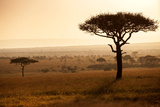 Kenya  Mara North Conservancy Mara North Landscape at Dawn