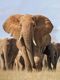 Kenya  Taita-Taveta County  Tsavo East National Park a Herd of Elephants