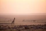 Kenya, Mara North Conservancy. a Young Giraffe with Never Ending Plains of Maasai Mara Behind Papier Photo par Niels Van Gijn