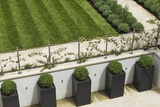 Topiary Balls in Powder-Coated Steel Containers Along the Retaining Wall