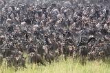 Kenya  Narok County