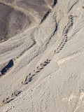 Ethiopia  Hamed Ela  Afar Region Tigrayan Men Lead Camel Caravans Along a Seasonal Watercourse